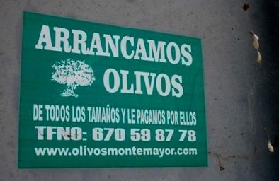 arrancamos_olivos
