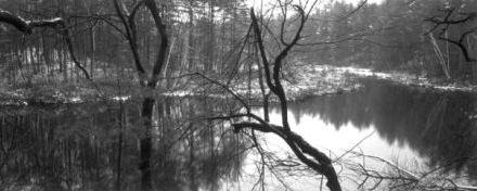 Walden woods 2002