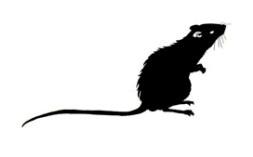 ratas3