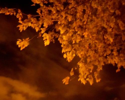 noche_lluvia_árbol