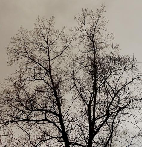 arbol_bosque_cielo