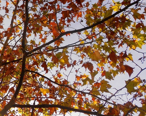 hojas_secas