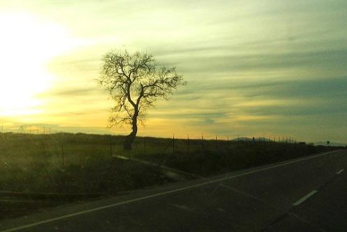arbol_carretera