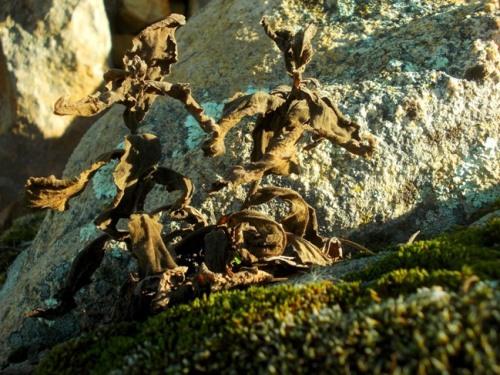 plantas_secas