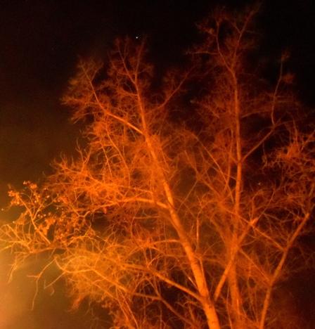 arbol_noche