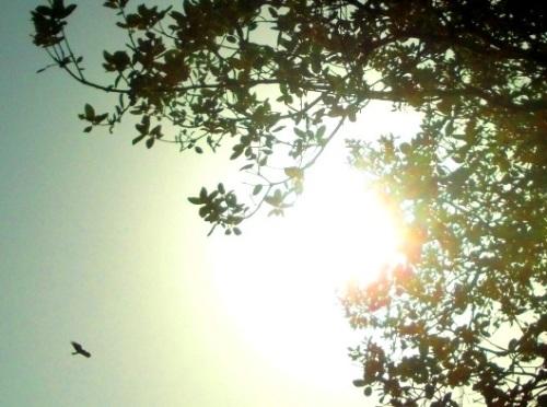 aguila en el sol