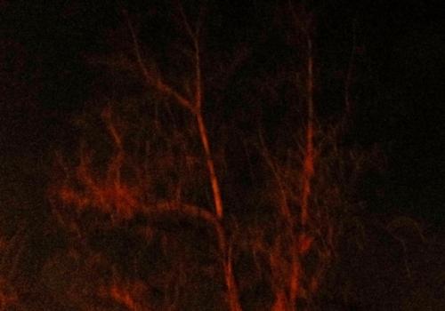 arbol noche
