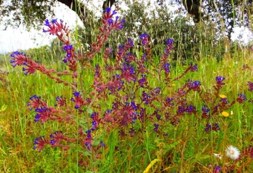 flores_campo