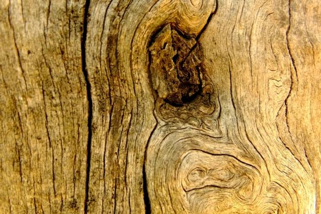 olivo tronco