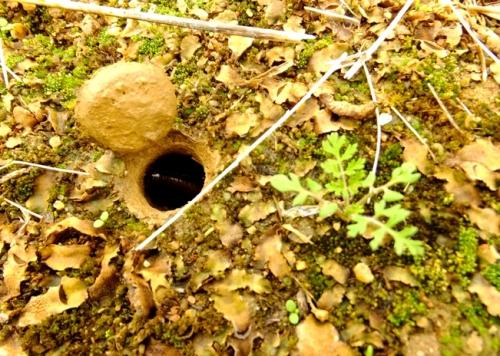 agujero-en-el-suelo