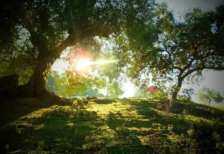 naturaleza – Página 2 – la vida debería llevar un sic entre paréntesis