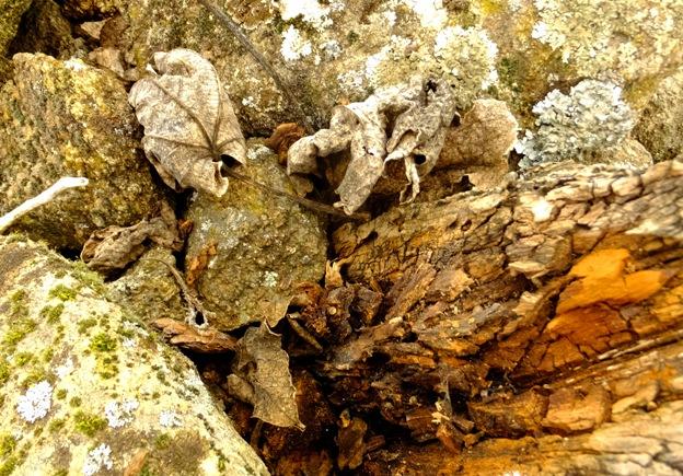 piedra-madera-hojas-secas